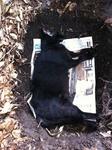 黒猫クロ 埋葬 IMG_7052.jpg