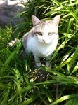 猫 ユリ IMG_7526.jpg