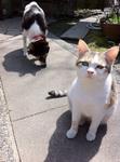 写真 犬モモと猫ゆり b8bbg-fjbimg_0907.jpg