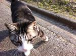写真 猫 スズ IMG_4300.jpg