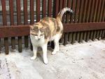 写真 猫 ゆり IMG_3215.jpg