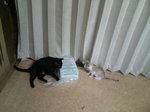写真 猫 クロ ゆり 110910_103240.JPG