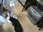 写真 猫 クロ ゆり ストーブ 扇風機 110910_103221 (1).JPG