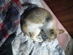 写真 子猫Y 110907_044848.JPG