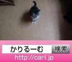 neko_IMG_20161017_1750371.jpg