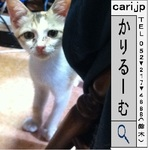 20110902 0906 cat.jpg