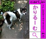 inu-kuro-110604-1011.png