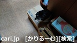 1812041923KIMG0237logo.jpg