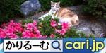 cariroom191225w506x253twittercat.jpg