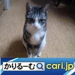 6_cat191204w500x500.jpg
