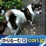 18_dog200127w500x500.jpg