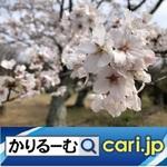 19_84k_sakura20200408w500x500.jpg