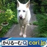 47_dog20210309w500x500 .jpg