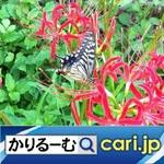 22_Butterfly200706w500x500.jpg