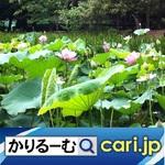 61_hana210630w500x500.jpg