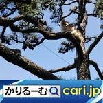 62_cat210630w500x500.jpg